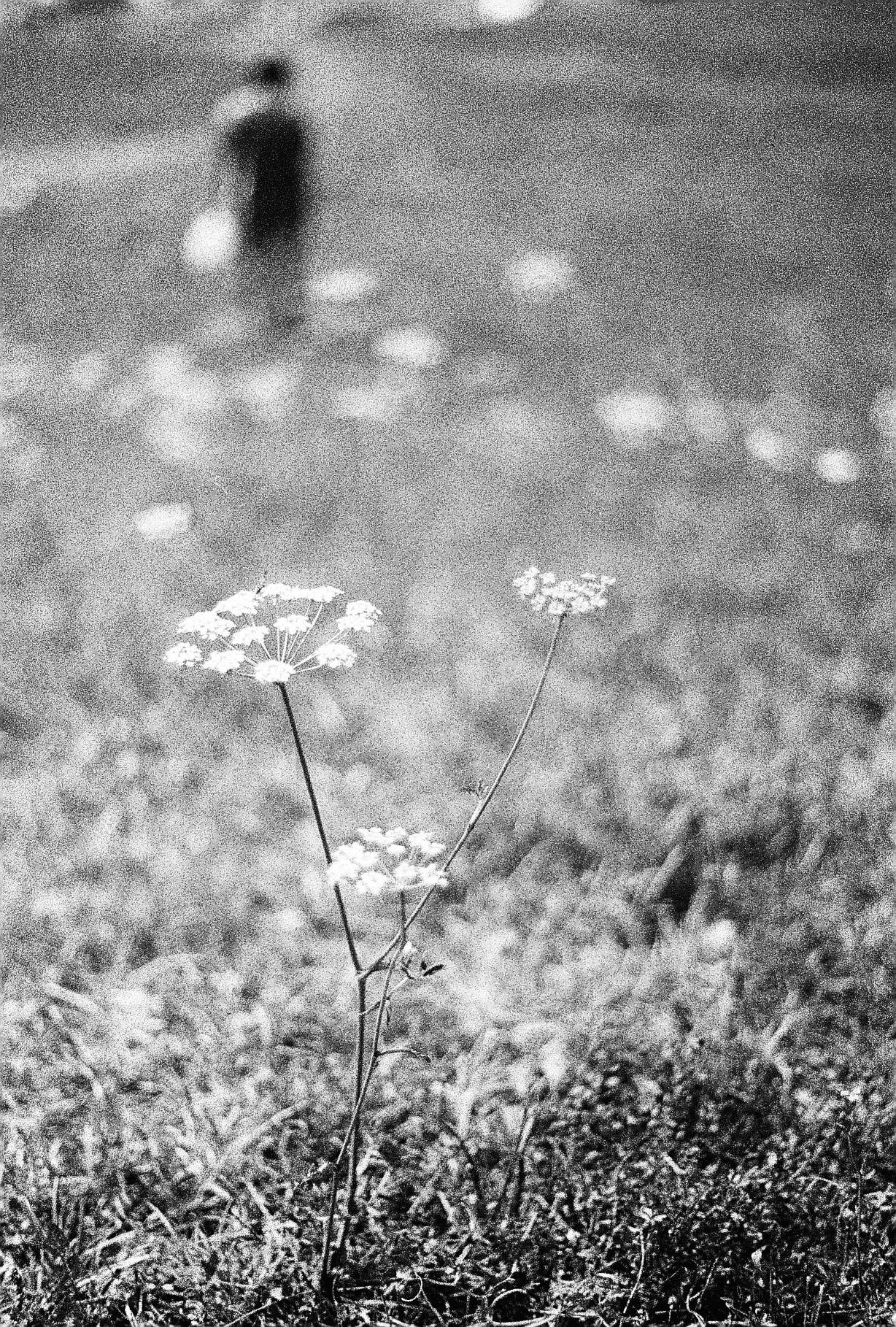 Wildflowers at Guca